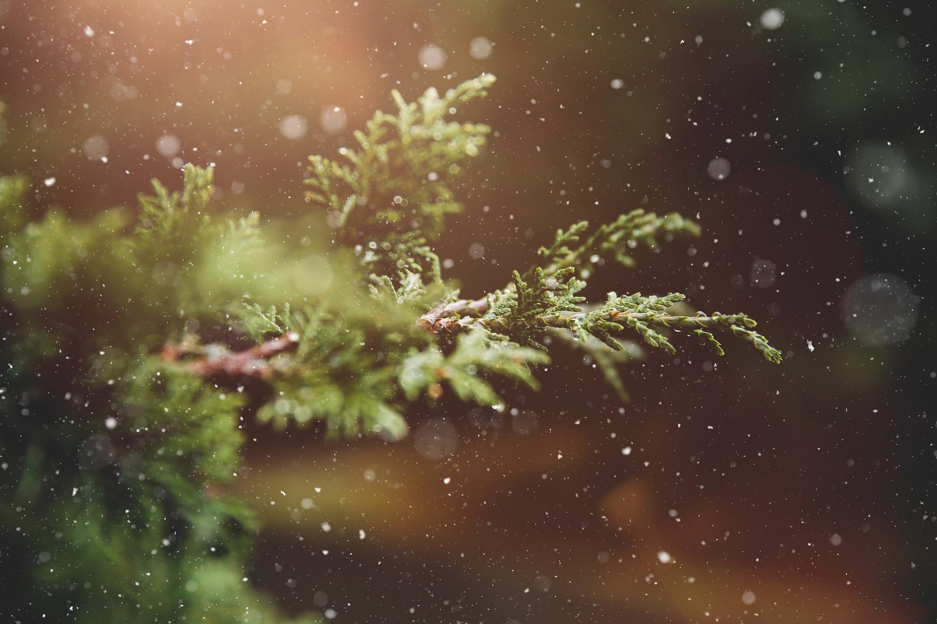 Séta a hóban | Zászkaliczky Pál: A várakozás megszentelése – Napi elmélkedések adventtől vízkeresztig